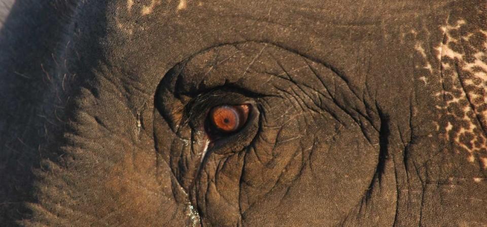 Human Elephant Interactions